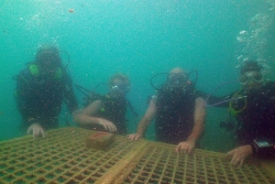 Summer Activity #3 : Baptème de plongée